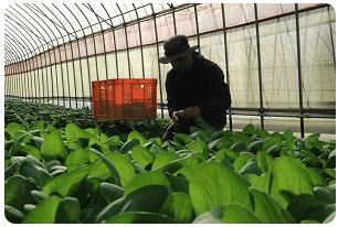 大分県の野菜宅配「ohana本舗」の有機野菜セットの口コミ・評判6