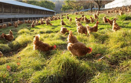 黒富士農場の平飼い卵リアルオーガニック卵の口コミ・評判17