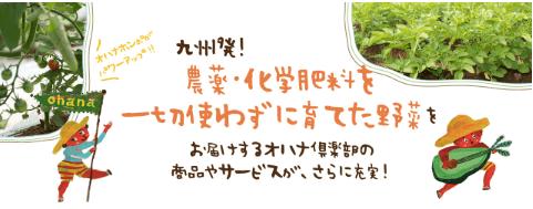 大分臼杵市の無農薬野菜ohana本舗の野菜セット25