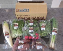 大分臼杵市の無農薬野菜ohana本舗の野菜セット14