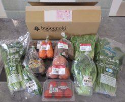 ぶどうの木の口コミ・評価、おすすめの有機野菜21