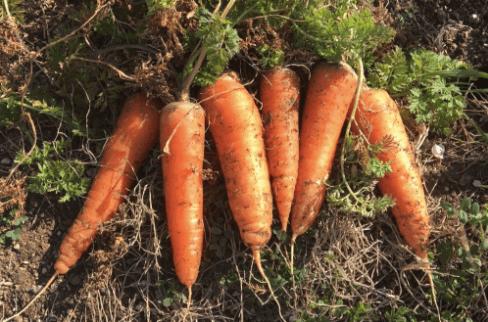 Farm&Storyの口コミ6