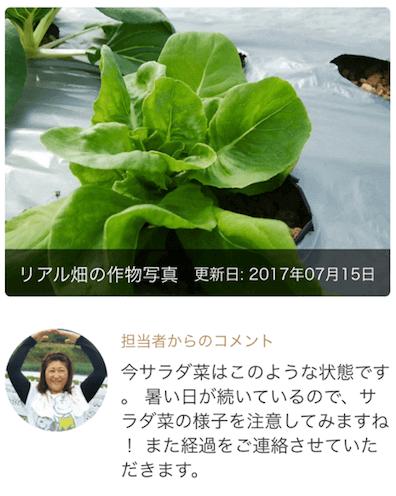 楽天ファームの有機野菜セットとサラダ定期便をお試し41