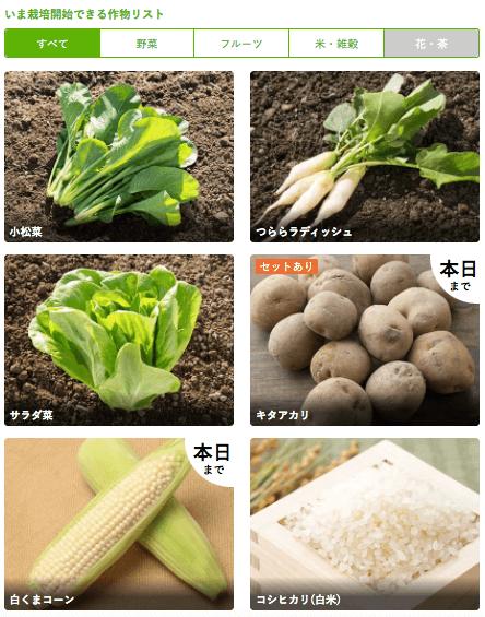 楽天ファームの有機野菜セットとサラダ定期便をお試し56