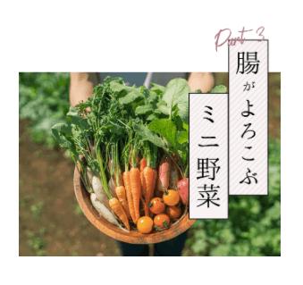 腸活ミニ野菜セットでぬか漬けライフ12