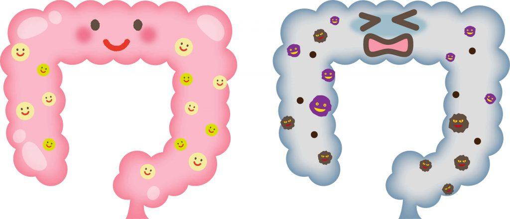 Kombucha(コンブチャ)とは?自家製の酵素ドリンクを製造49