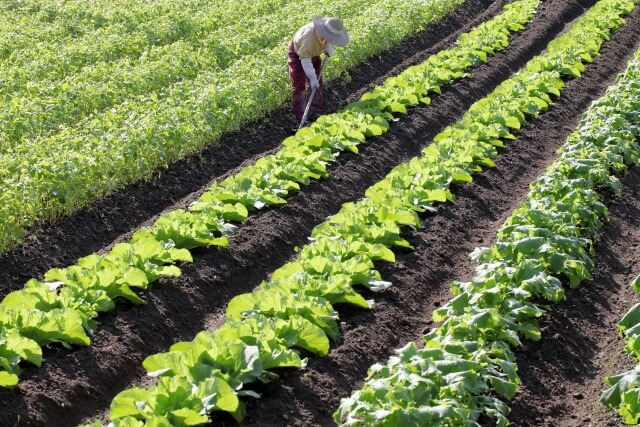 自然栽培野菜宅配・口コミが高い比較ランキング2