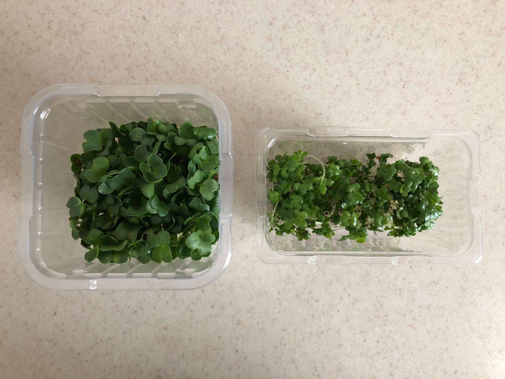 ブロッコリースプラウトの栄養価・効果・おすすめレシピ・自家栽培方法を野菜ソムリエが解説7