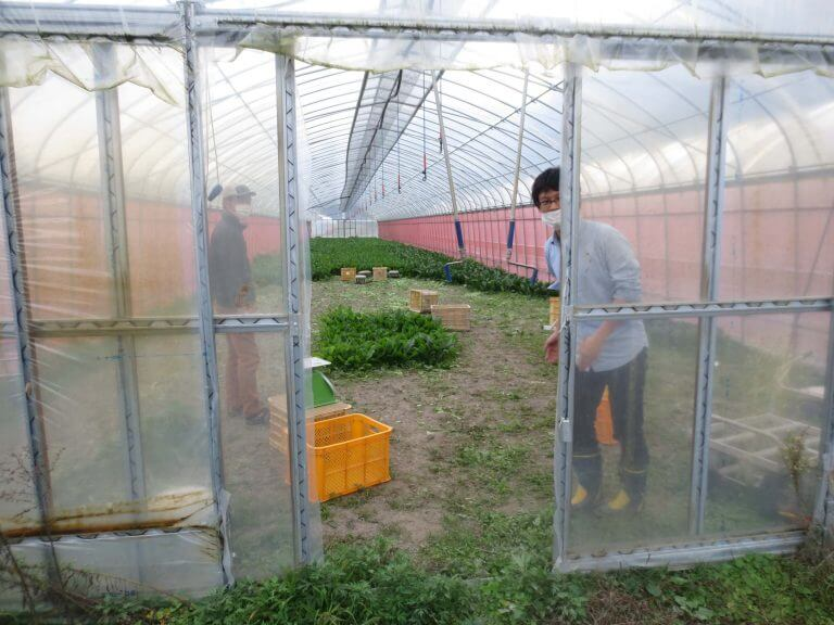自然栽培野菜宅配・口コミが高い比較ランキング33