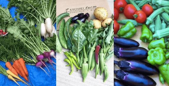 翔栄ファーム(SYOUEI FARM)の無農薬・自然栽培野菜を大手宅配と比較!6