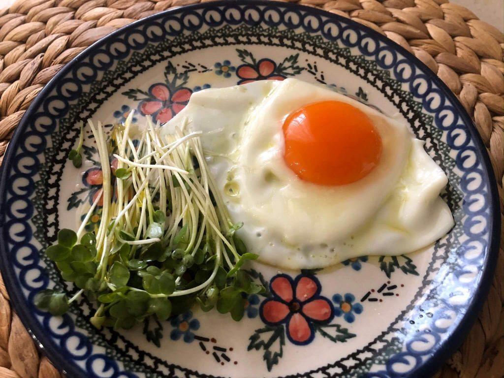 スーパー野菜「ブロッコリースプラウト」の栽培日記38