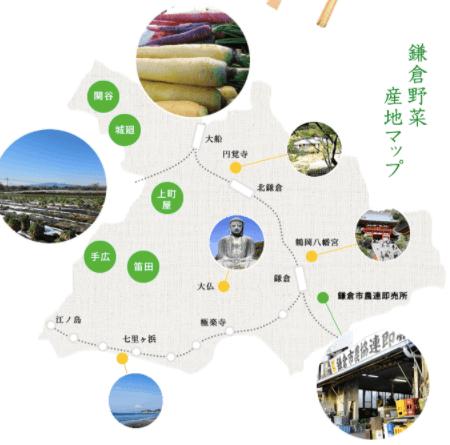 鎌倉直産野菜宅配「かまベジ」のお試しセットを注文10