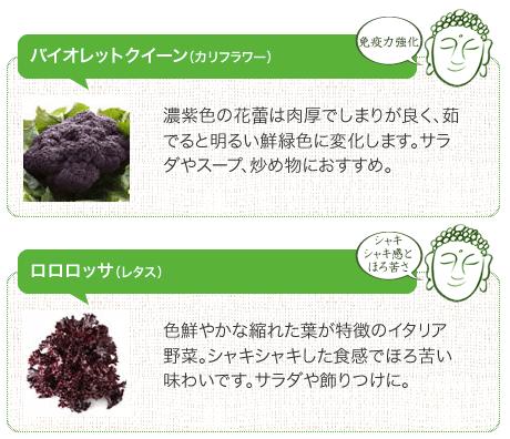 鎌倉直産野菜宅配「かまベジ」のお試しセットを注文8