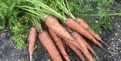 あなた専用個人農家・自然栽培野菜の宅配「ベジモ」のお試しセットの口コミ32