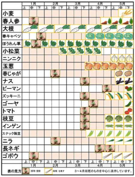 綾・早川農苑の無農薬野菜セットを注文6