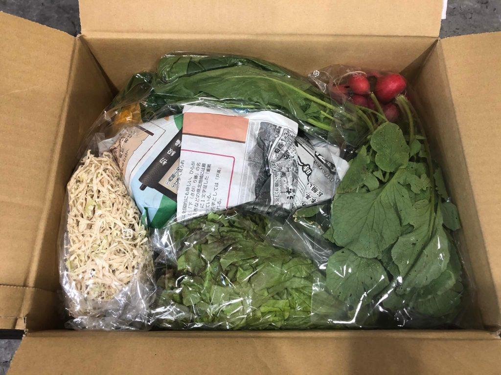 綾・早川農苑の無農薬野菜セットを注文18