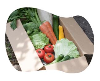 茨城県産の無農薬・有機野菜の宅配「コトコトファーム」の野菜セットの口コミ7