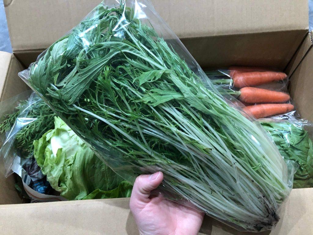 茨城県産の無農薬・有機野菜の宅配「コトコトファーム」の野菜セットの口コミ15