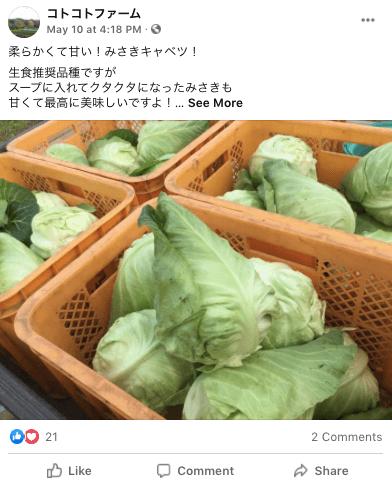 茨城県産の無農薬・有機野菜の宅配「コトコトファーム」の野菜セットの口コミ9