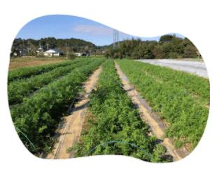 茨城県産の無農薬・有機野菜の宅配「コトコトファーム」の野菜セットの口コミ6