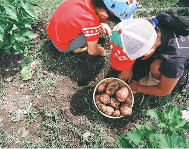 奈良の化学肥料・化学農薬不使用野菜宅配サービス「さん・らいふ」の口コミと評判13
