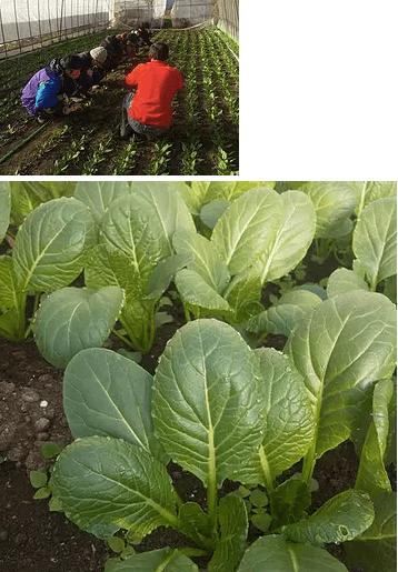 【口コミ】長野産の有機野菜宅配「のらくら農場」7
