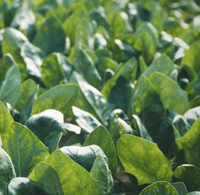 奈良の化学肥料・化学農薬不使用野菜宅配サービス「さん・らいふ」の口コミと評判4