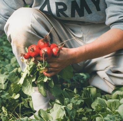 奈良の化学肥料・化学農薬不使用野菜宅配サービス「さん・らいふ」の口コミと評判6