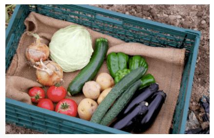 京都市の無農薬・有機肥料のオーガニック野菜宅配「あらい農園」の口コミ4