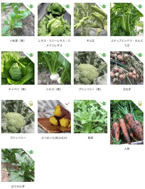 京都市の無農薬・有機肥料のオーガニック野菜宅配「あらい農園」の口コミ5