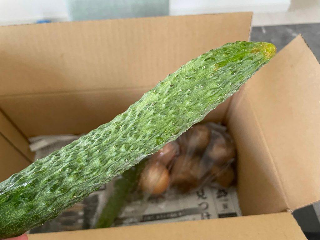 京都市の無農薬・有機肥料のオーガニック野菜宅配「あらい農園」の口コミ24