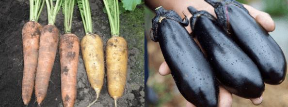 東京野菜カンパニー:東京産の低農薬・無農薬野菜宅配4