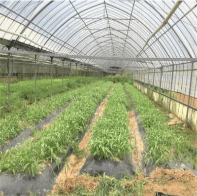 福岡・糸島の有機野菜・自然栽培野菜宅配の松の実ファーム:口コミ1