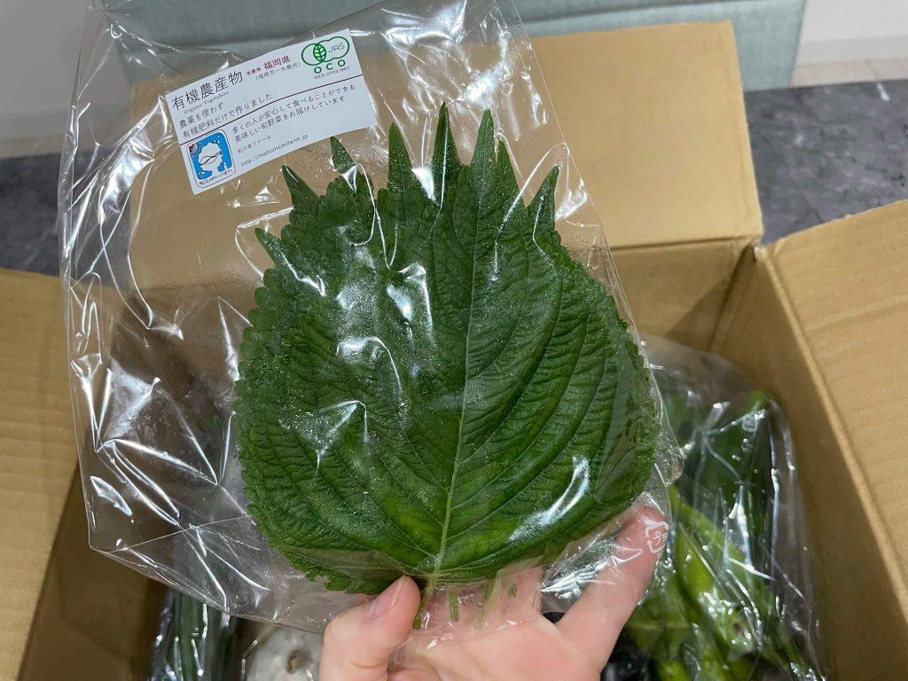 福岡・糸島の有機野菜・自然栽培野菜宅配の松の実ファーム:口コミ13