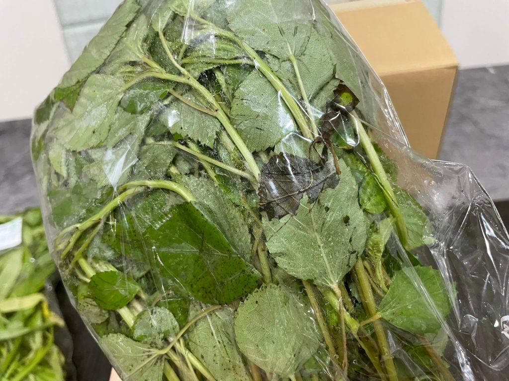 福岡・糸島の有機野菜・自然栽培野菜宅配の松の実ファーム:口コミ27