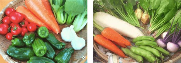 福岡・糸島の有機野菜・自然栽培野菜宅配の松の実ファーム:口コミ4